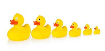 rubber-ducks-in-row.jpg